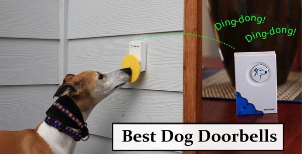 Featured image for article: Best Dog Doorbells